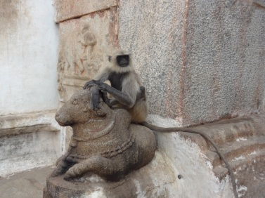 Thinking monkey - Hampi