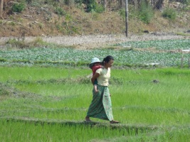 Rice fields - Treck Hsipaw