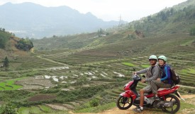 Rice fields - Sapa