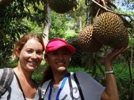 Durian farm - Penang