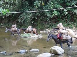 Donkeys - Ciudad Perdida