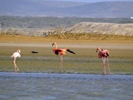 Flamingos - Punta Gallinas
