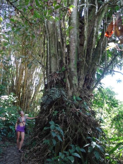 Jungle - Tena