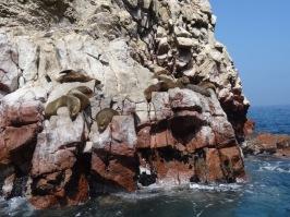 Balletas islands - Paracas National Reserve