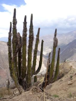 Colca Canyon