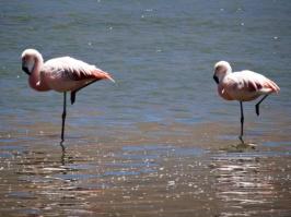 Flamingos - Sur Lipez