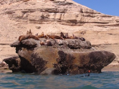Sea lions - Peninsula Valdes