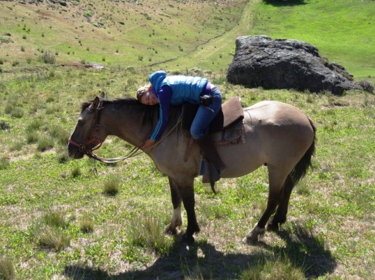 Horse riding - El Chalten